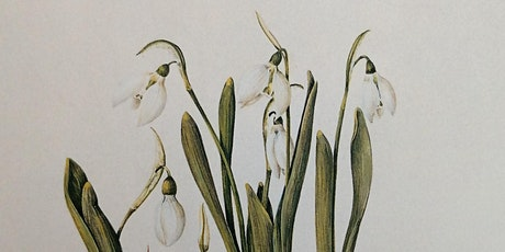 Snowdrop sketching workshop (EWC 2806) tickets