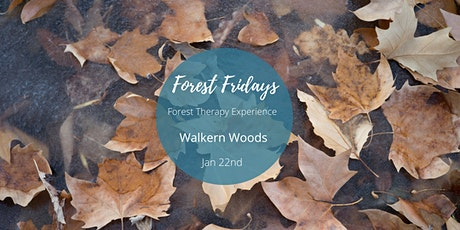 Forest Friday's - Woodland Wellness (POSTPONED - Tier 5  restrictions) tickets