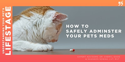 How to survive administering medication to my pet!