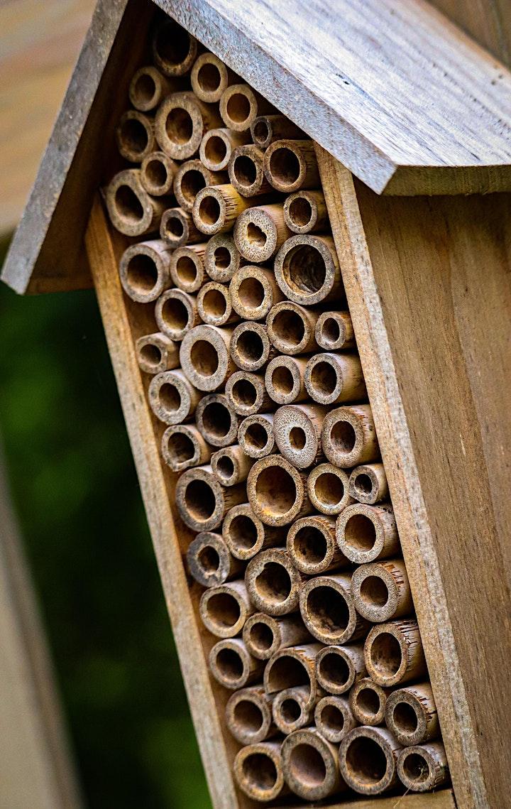 Mason Bees & Native Pollinators image