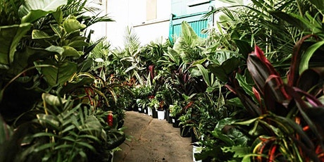 Sydney - Huge Indoor Plant Warehouse Sale - Summertime Madness tickets