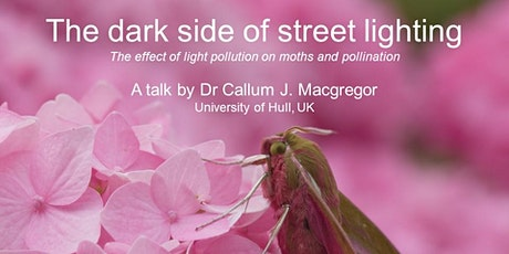Free webinar: how light pollution affects moths (NYM Dark Skies Festival) tickets