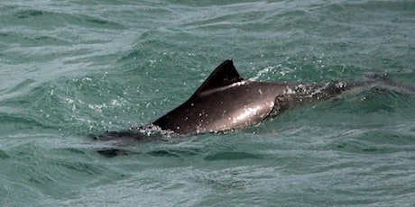 The Biology and Behaviour of Harbour Porpoise tickets