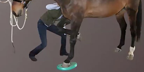 Motor-Control Based Rehabilitationf for Equine Spinal Dysfunction tickets