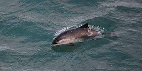 Threats to Harbour Porpoise in UK Waters tickets