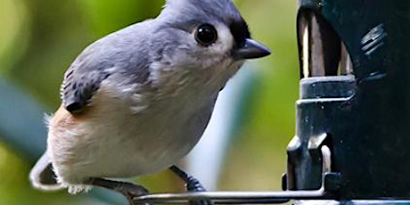 Backyard Birds: Bird-Friendly Landscaping  - Tuesday, Feb. 23rd - 11:00 am tickets