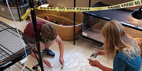 VIRTUAL: Crime Scene Forensics: Catching a Criminal | Grades 6-8 tickets