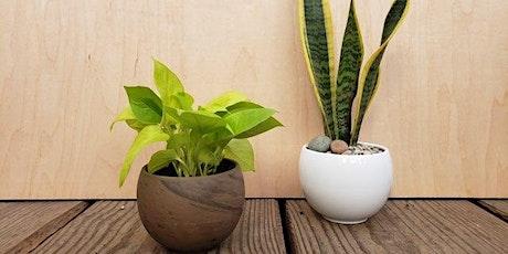 Virtual Demystifying Houseplants - Sun, Mar 7th, 2021 tickets