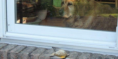 """""""Your Pane is Their Pain""""- Making Your Home Safe for Birds tickets"""
