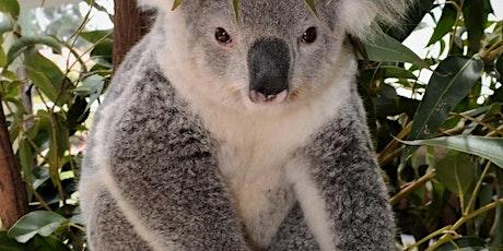 Koala Fest tickets