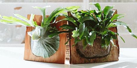 Mounting Indoor Plants to Wood tickets