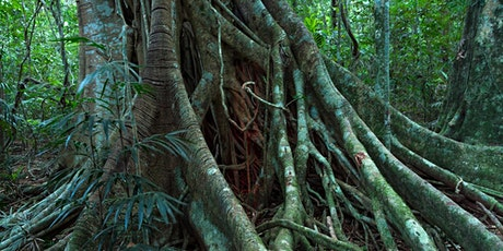 The 'big scrub' rainforest - Mary Cairncross an important remnant tickets