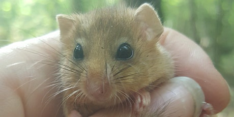 Dormice - Ecology, Survey, and Habitat Management 2021 ONLINE tickets