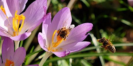 Bucks County Beekeepers 2021 Virtual Spring Seminar tickets