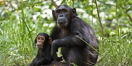 Chimpanzee SAFE  Gala tickets