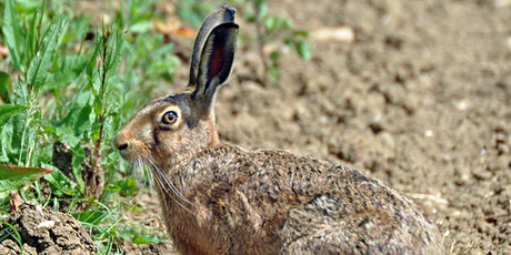 The life and times of the Brown Hare in Wiltshire - with Peter Thompson tickets