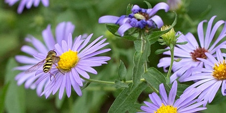 Stop Mowing, Start Growing! 3rd Annual Native Plant Symposium for Beginners tickets