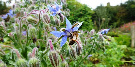 Bees and Biodiversity Online Talk tickets