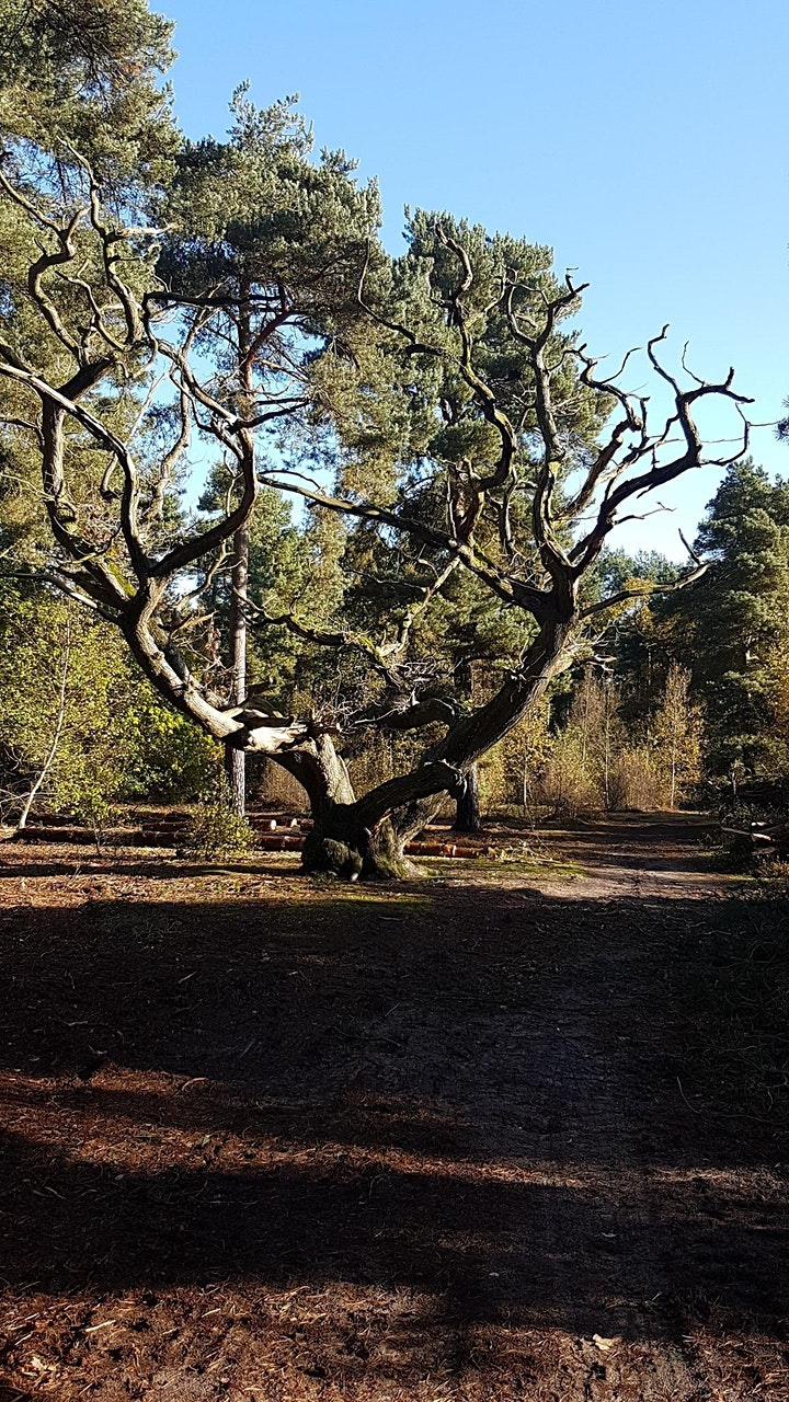 Forest Bathing Walk image