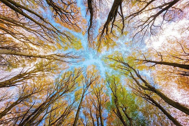 Waldbaden Schnupperkurs: Bild