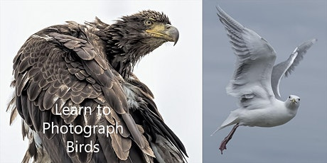 Bird Photos for Novice Photographers tickets