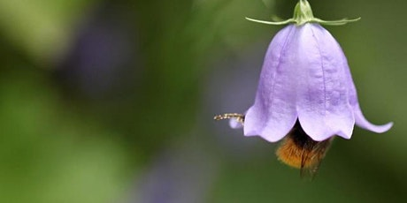 ONLINE TALK: Dancing with Bees: A Journey Back to Nature tickets
