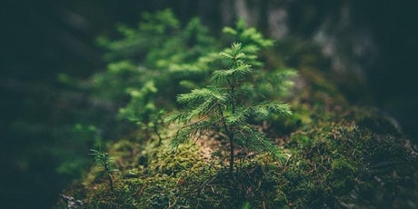 Spring Equinox Forest Bathing Experience tickets