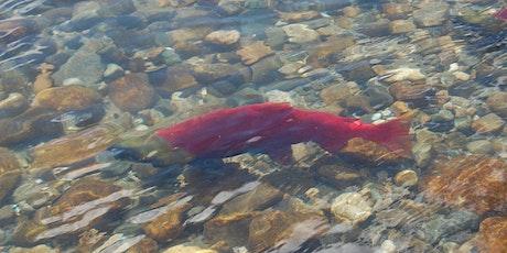 Wild Salmon tickets