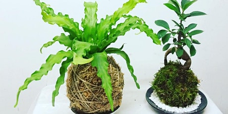 Kokedama workshop tickets
