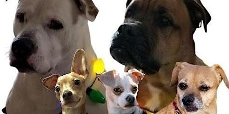Go Dog Go - Dog Party tickets