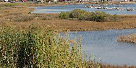 Living Shoreline Course, Pensacola and Perdido Bays Estuary Program tickets