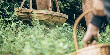 Foraging course at 7th Rise tickets