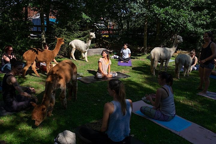 Alpaka Yoga Bern Ost: Bild