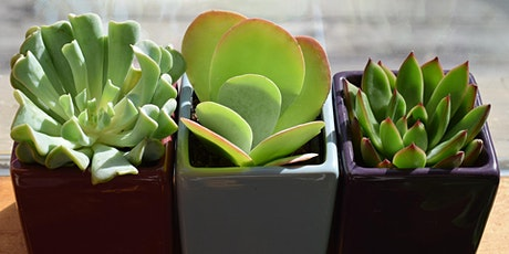 Ultimate Houseplant Guide for Beginners: Part Two (Virtual) tickets