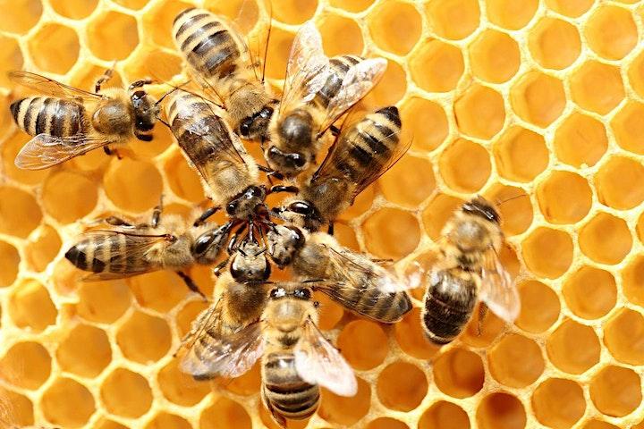 Beginners' Beekeeping - Full Weekend image