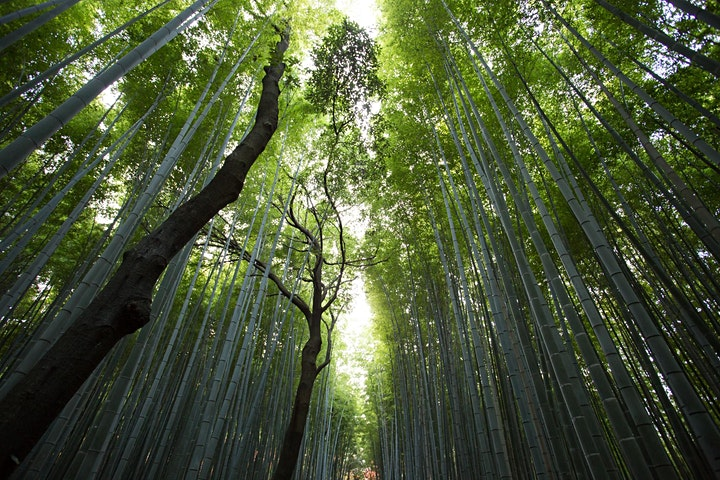 Japan - Virtual Kyoto Arashiyama Walking  Tour image