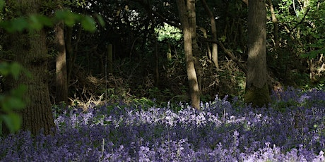 Guided walk at Hagbourne Copse tickets