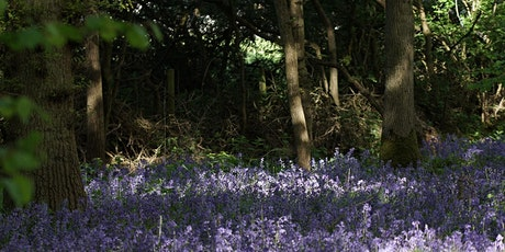 Guided walk at Hagbourne Copse 3 tickets