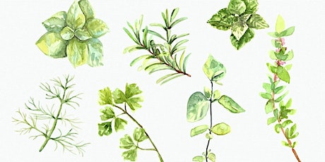 Painting Herbs & Spices in Watercolor For Beginners with Becca A Flis tickets