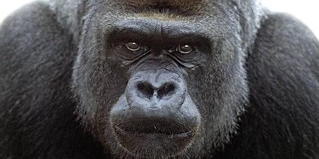 Urban Gorilla 2021 tickets