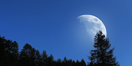 Full Moon Forest Bathing Walk (Remotely-Guided) tickets