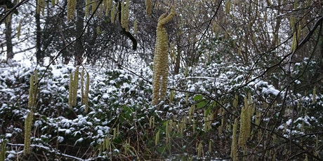 Swaines Green - guided nature walk - the reserve in winter tickets