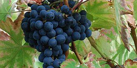 Virtual Wine Tasting -  Mourvedre! tickets