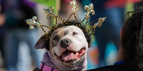 """Celebrating Krewe of Barkus!"" Jan. 27th Wine & Cheese Party tickets"