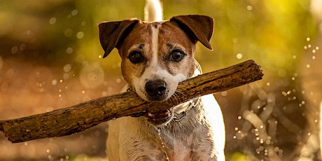 "Online Workshop ""Hundefotografie"" Tickets"