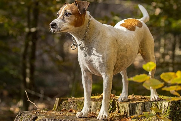 "Online Workshop ""Hundefotografie"": Bild"