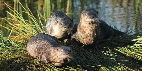 Jan 28 Critter Club:  Furry Wetland Friends Week tickets