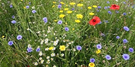 Native British Flowers: Identification and Folklore tickets