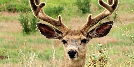 Junior Naturalist: Wildlife Connections tickets