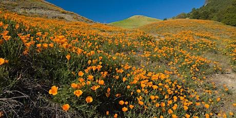 Mangini Ranch Wildflower Hike tickets
